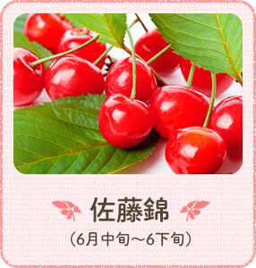 甘味のある美味しいさくらんぼ 佐藤錦(6月中旬~6下旬)